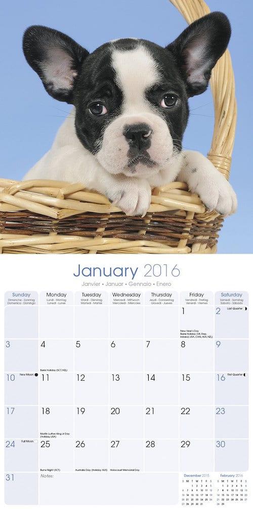 chiens et chats les calendriers 2016 sont arriv s actualit chien sant vet. Black Bedroom Furniture Sets. Home Design Ideas