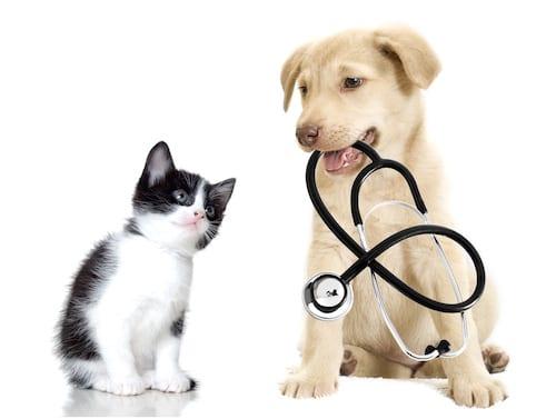 Puces tiques de nouveaux traitements pour chien et for Repulsif chien et chat exterieur