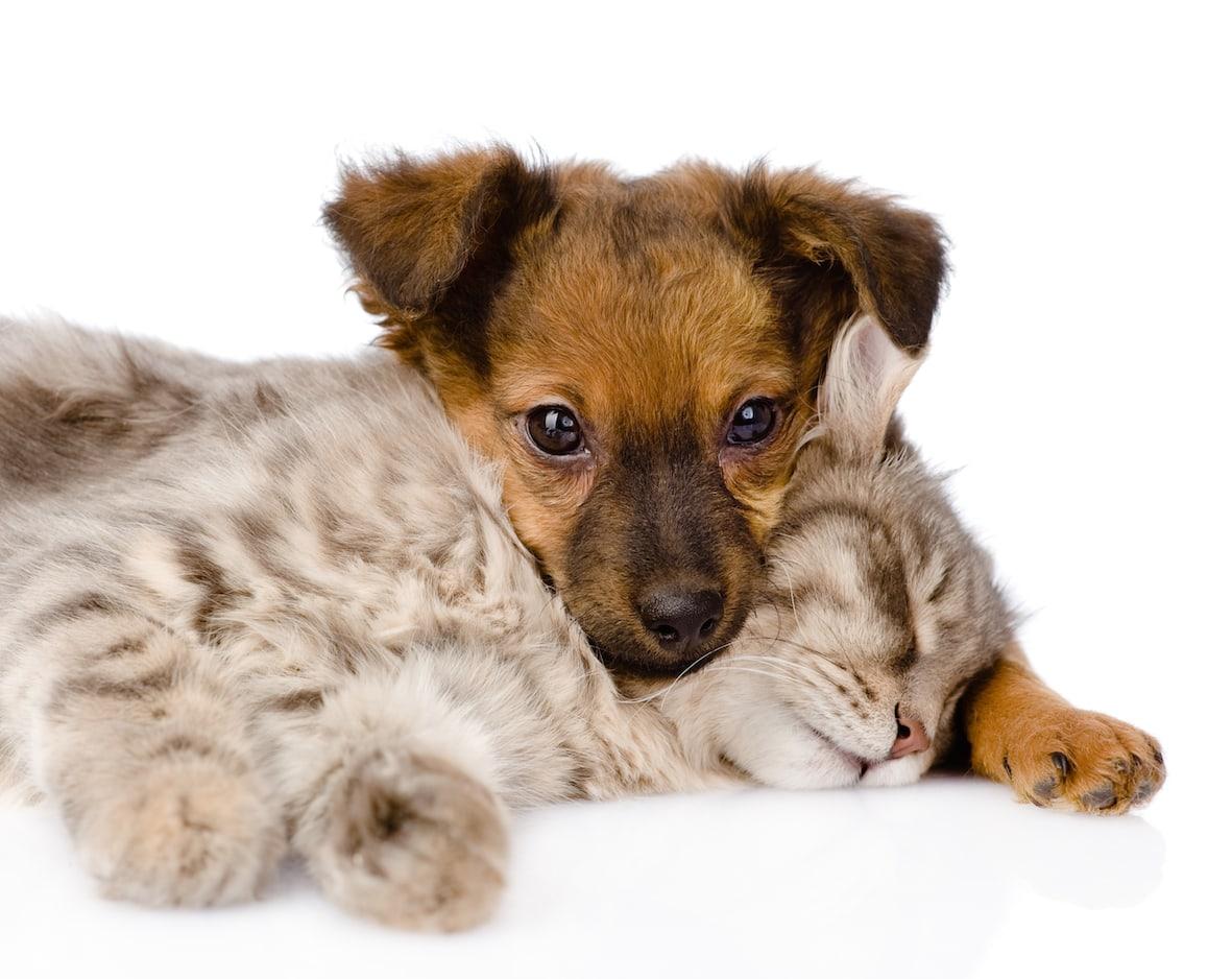 abandons chiens chats les campagnes choc 2014 pour sensibiliser dossiers chien sant vet. Black Bedroom Furniture Sets. Home Design Ideas