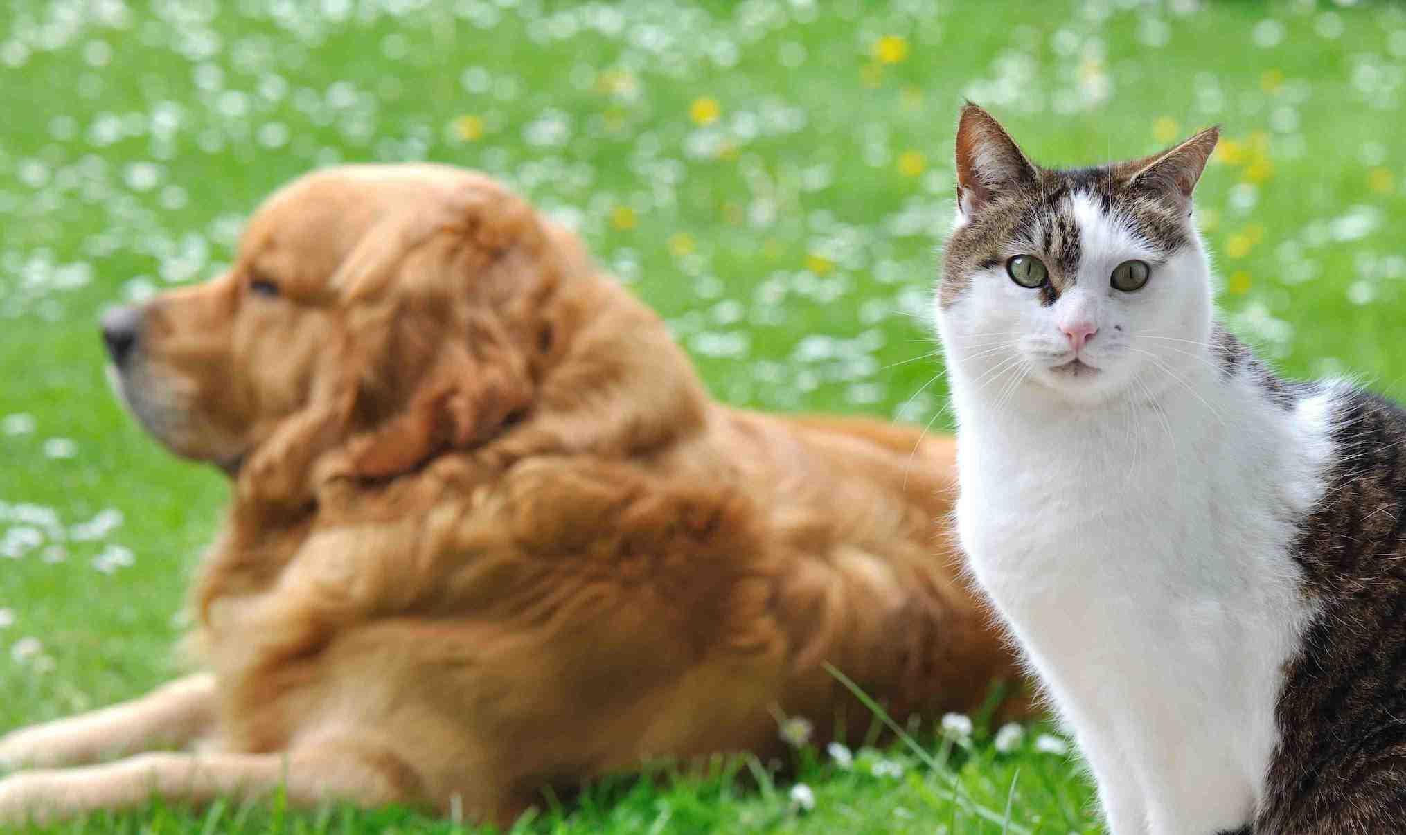 Parasites chien et chat ils reviennent au printemps for Salon du chien et du chat 2017