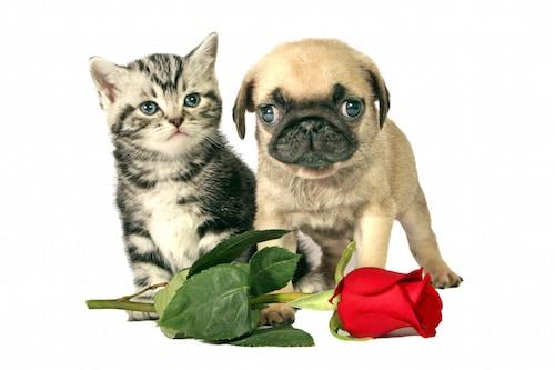 saint valentin les animaux de compagnie aussi ont droit leur cadeau actualit chien. Black Bedroom Furniture Sets. Home Design Ideas