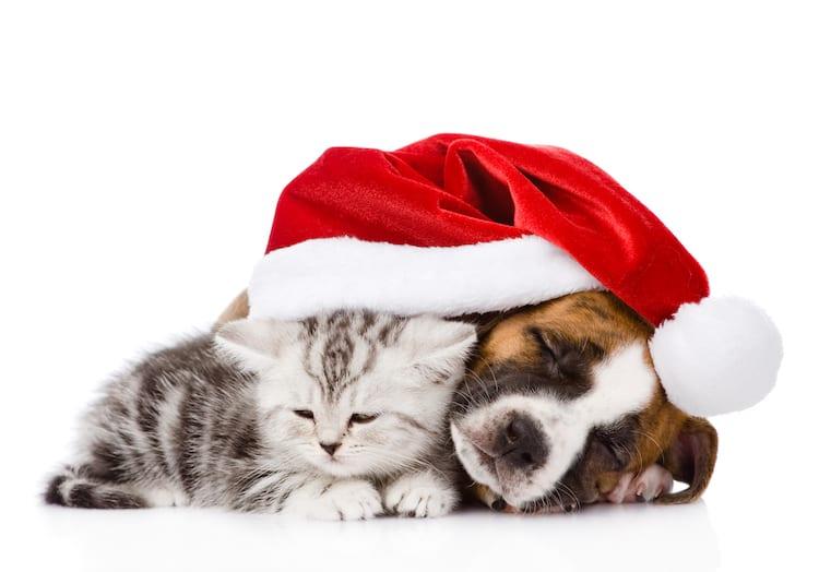 No l 2016 chiens et chats auront droit leurs cadeaux actualit chien sant vet - Image de chat de noel ...