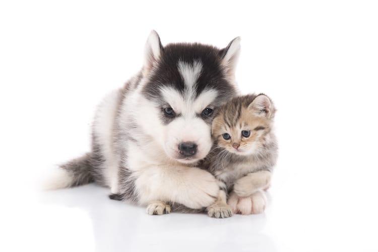 2017 un nom commen ant par n pour votre chien ou chat - Photo de chien et chat mignon ...
