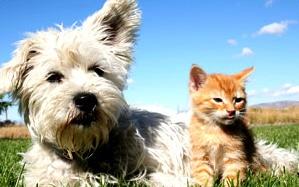assurance sant chien et chat quelle utilit dossiers chien sant vet. Black Bedroom Furniture Sets. Home Design Ideas