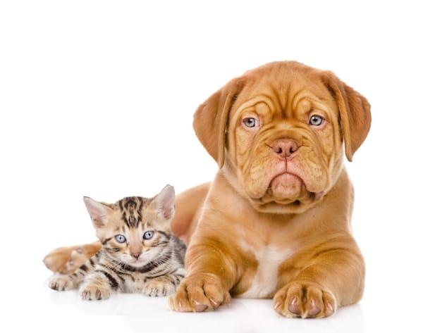 chiots et chatons un site pour trouver un leveur s rieux actualit chien sant vet. Black Bedroom Furniture Sets. Home Design Ideas