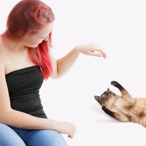 des exercices faire la maison avec son chien ou chat bien tre physique et mental. Black Bedroom Furniture Sets. Home Design Ideas