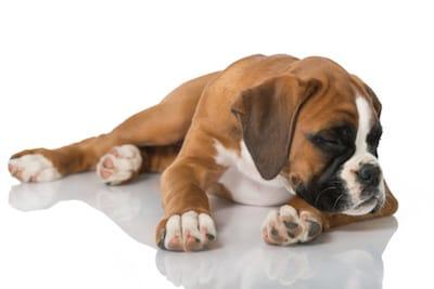 Gastro-entérite chez le chien et chat : la soigner et la ...