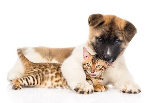 Gastro ent rite chez le chien et chat la soigner et la - Com chien et chat ...