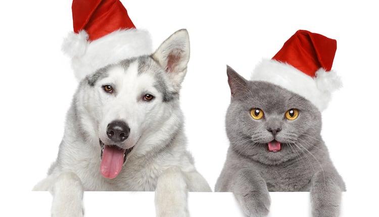 Quel cadeau faire son chien ou chat en fin d ann e actualit chien sant vet - Image de chat de noel ...