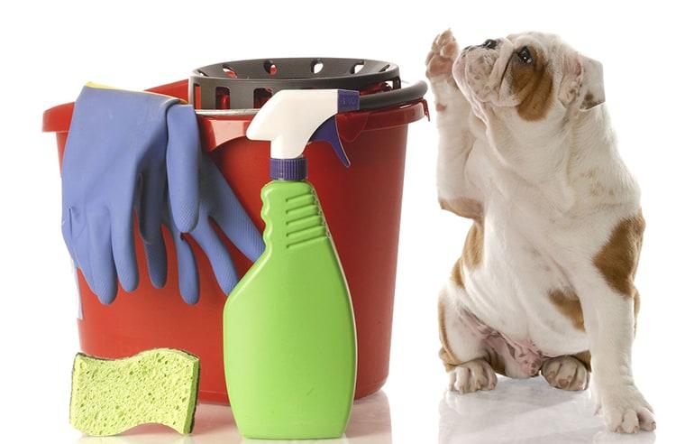 pipi crotte de chien et chat nettoyer les petits oublis trucs astuces chien sant vet. Black Bedroom Furniture Sets. Home Design Ideas