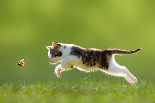 Organiser les vacances avec son chien chat ou nac for Acheter piscine pour chien