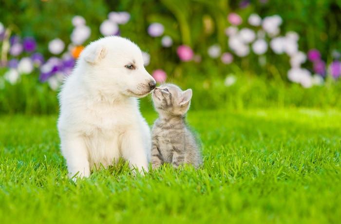 10 dangers qui guettent votre chien ou chat au printemps maladies et pr vention chien sant vet - Herbe a chat seche ...