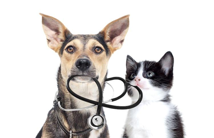 une feuille de soins pr u00e9-remplie et d u00e9mat u00e9rialis u00e9e - assurance animaux - chien