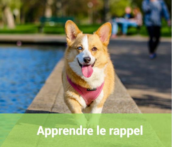 Éducation chiot chien - SantéVet