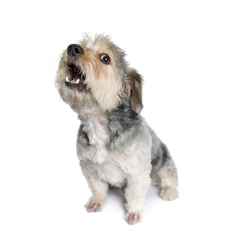 Aboiement chien sant vet - Loi sur nuisances sonore par aboiement de chiens ...