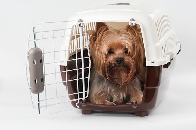 caisse de transport chien sant vet. Black Bedroom Furniture Sets. Home Design Ideas
